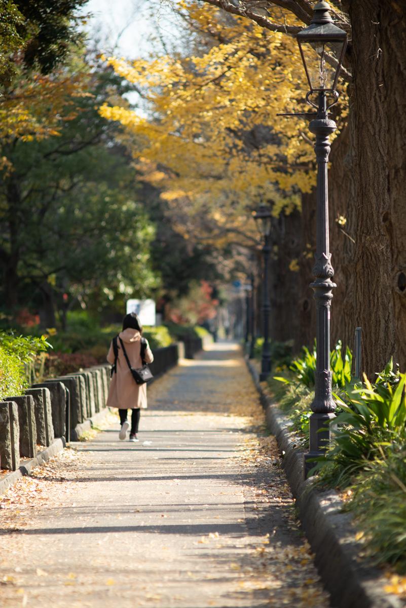 山下公園銀杏並木