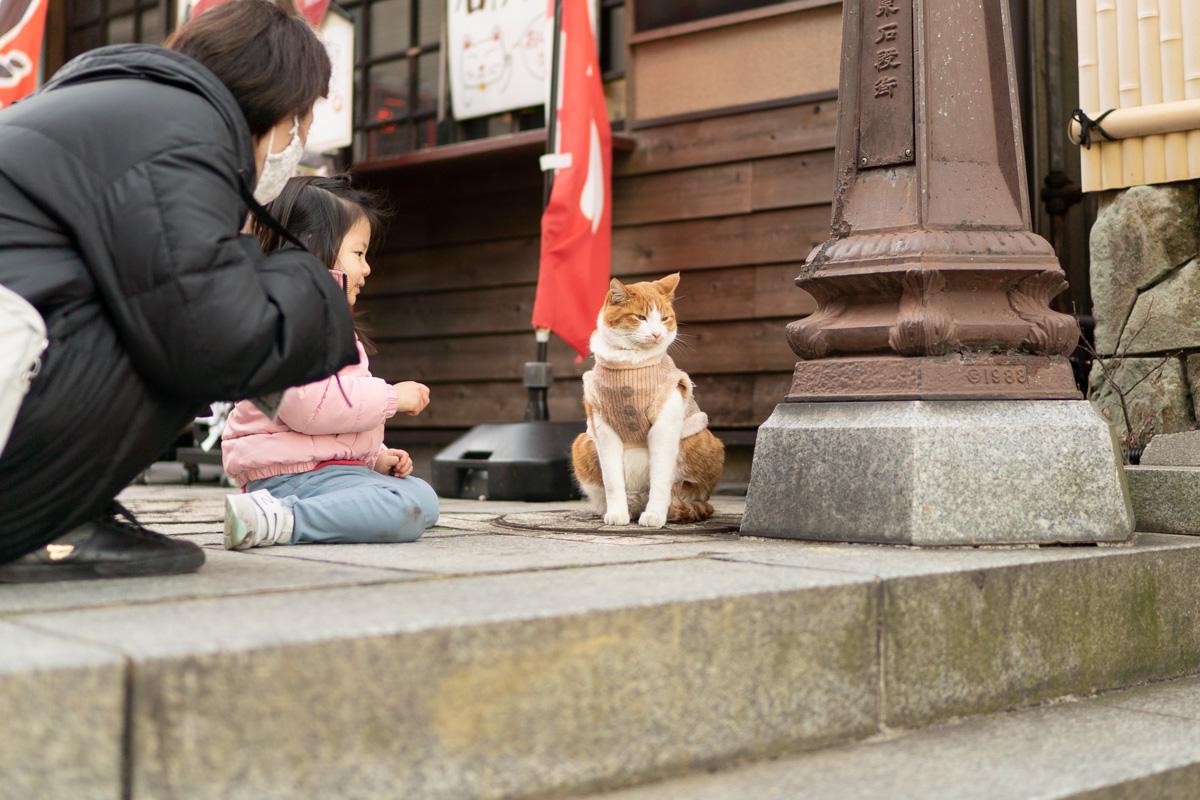 伊香保の猫