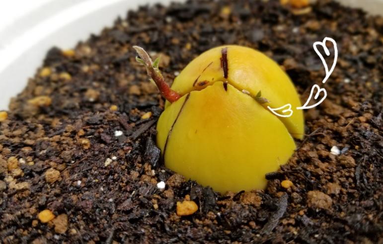 f:id:fortunate-seeds:20180605121241j:plain