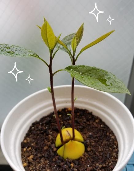 f:id:fortunate-seeds:20180620101539j:plain