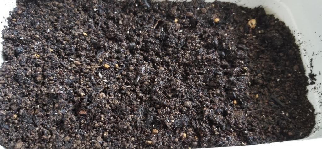 f:id:fortunate-seeds:20180726191253j:plain