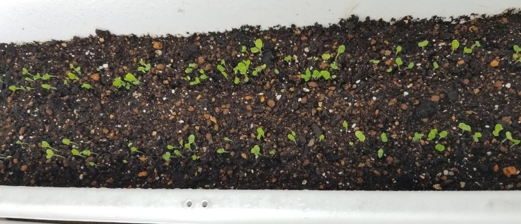 f:id:fortunate-seeds:20180913184007j:plain