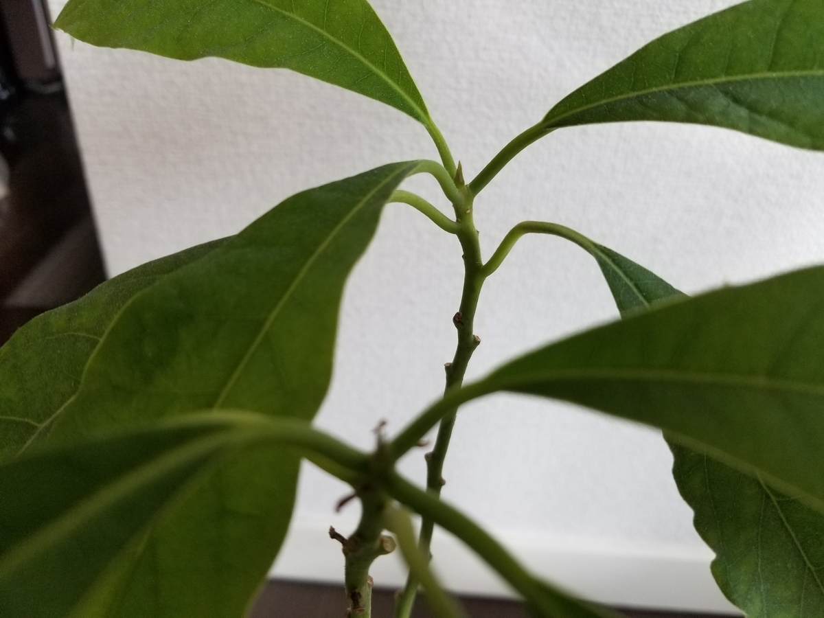 f:id:fortunate-seeds:20190326153553j:plain