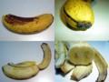 バナナのニコイチ