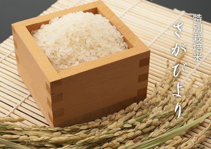 特A評価!特別栽培米さがびより 7kg