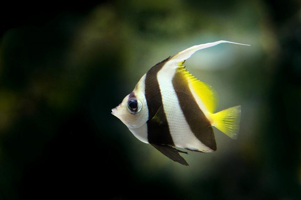 f:id:freshwaterfish:20190829151016j:plain