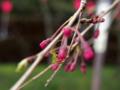 [動物][虫]蜘蛛と枝垂れ桜