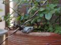 [動物][両生類]去年我が家のベランダを訪れた蛙ちゃん