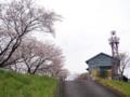 [植物][Prunus][桜]八楠水防倉庫と火の見櫓2017/04/10