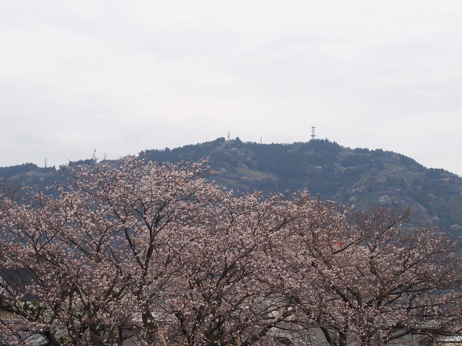 桜と高草山2017/04/10