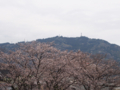 [植物][Prunus][桜]桜と高草山2017/04/10