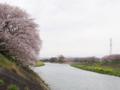 [植物][Prunus][桜]瀬戸川・牛田橋から2017/04/10