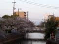 [植物][Prunus][桜]小石川めがね橋から