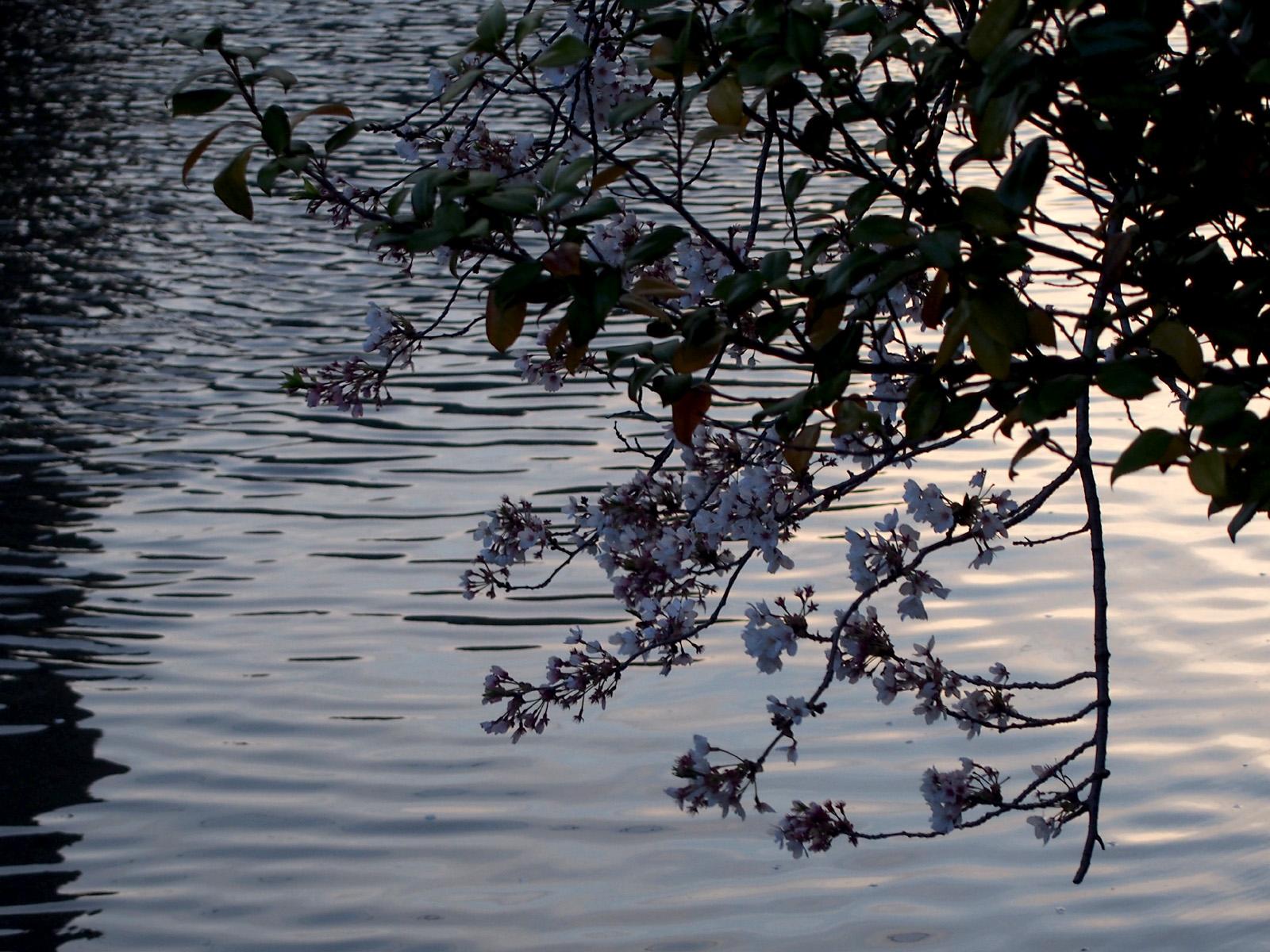 夕方の水面