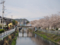 小石川の水門と桜並木