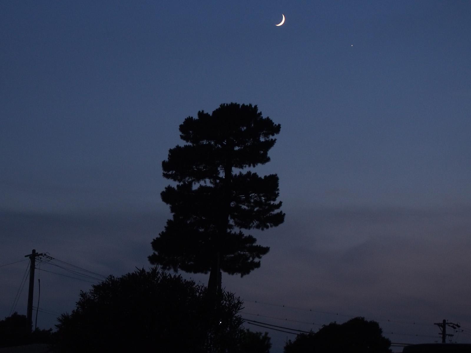 松の木の先の星