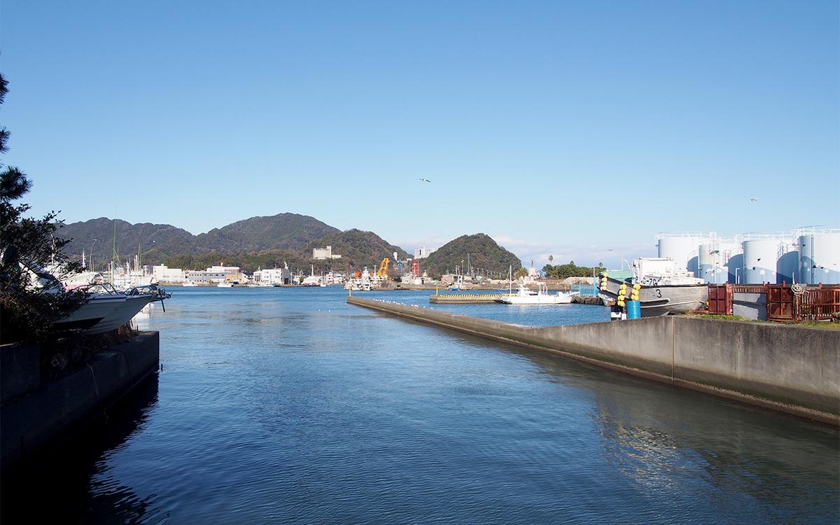 焼津港、突堤、ユリカモメ