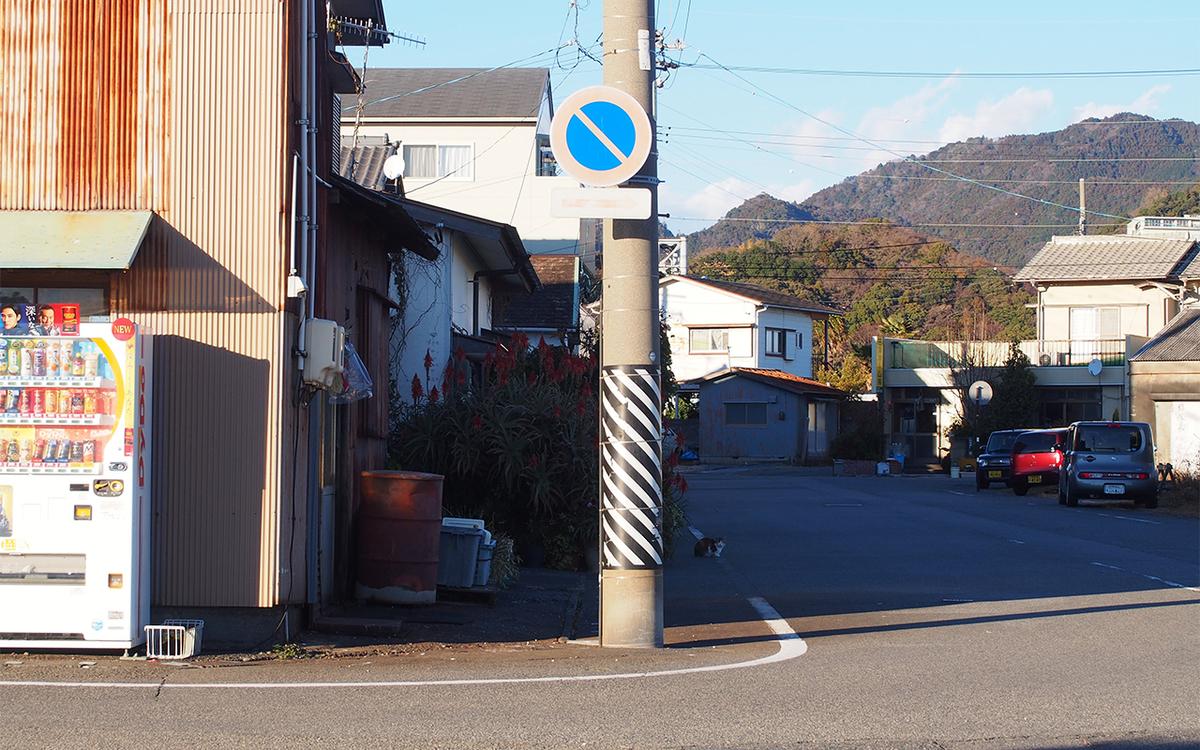 早川竹材の巨大アロエと猫ちゃん