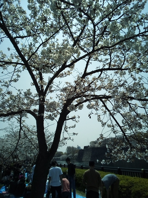 f:id:fromkishibe:20190410162032j:plain