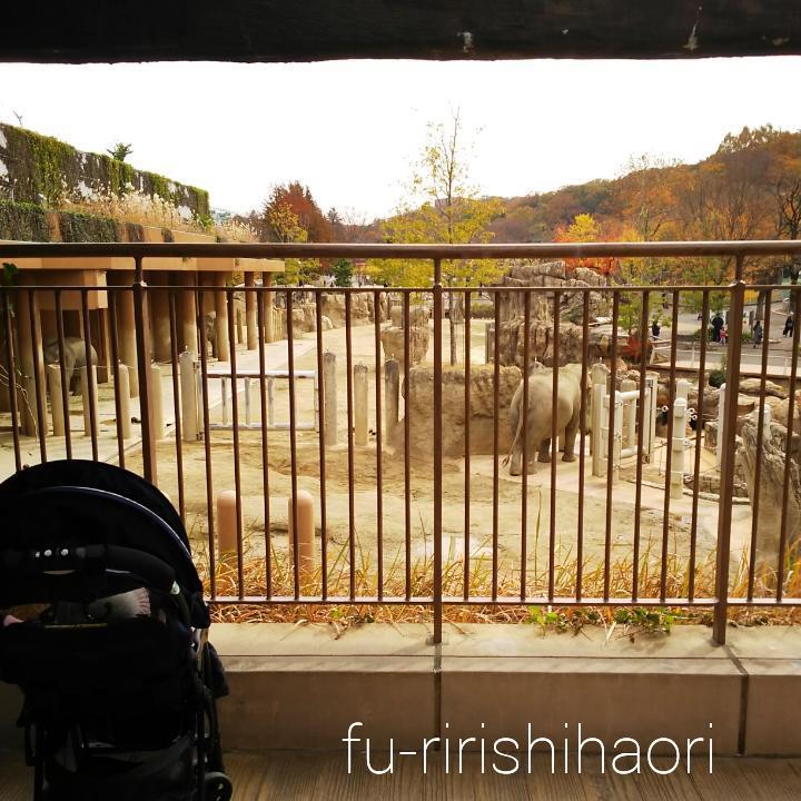 東山動植物園のゾウ舎二階からゾウを見た様子