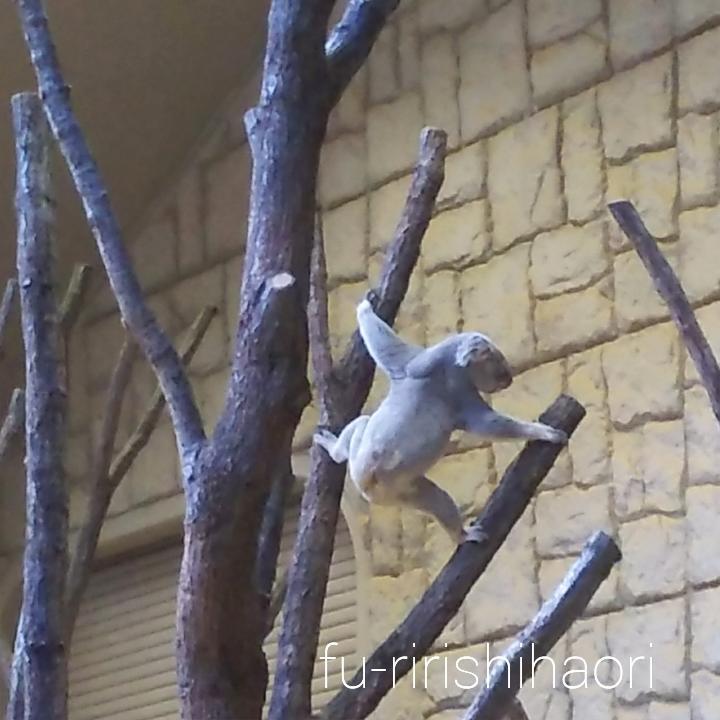 違う枝へ移動しようとしているコアラ