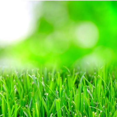 キラキラした芝生