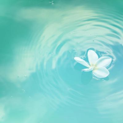 水面に浮かぶ白い花