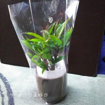 無印良品の『瀬戸焼の鉢の観葉植物』の『パープルコンパクタ』の梱包状態