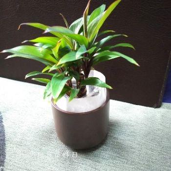 無印良品の『瀬戸焼の鉢の観葉植物』の『パープルコンパクタ』の梱包状態2
