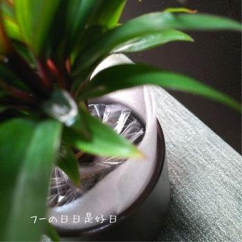 無印良品の『瀬戸焼の鉢の観葉植物』の『パープルコンパクタ』の梱包状態3