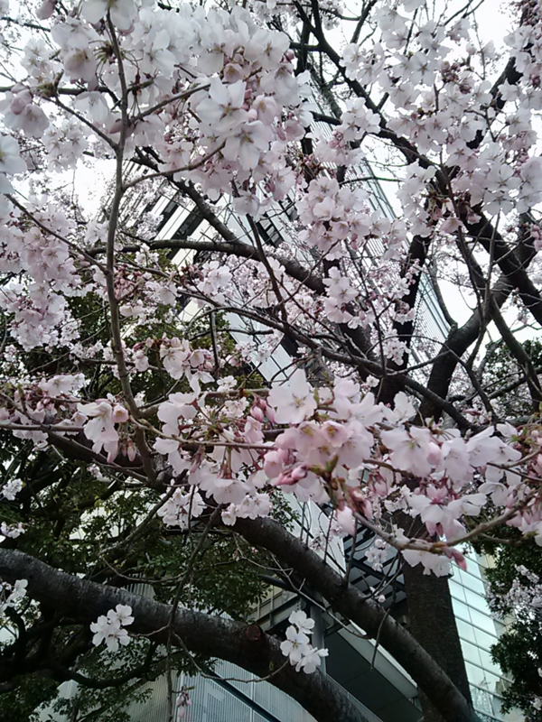 f:id:fu_ryu:20140326171720j:image