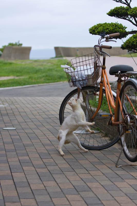 f:id:fubirai:20080910231250j:image