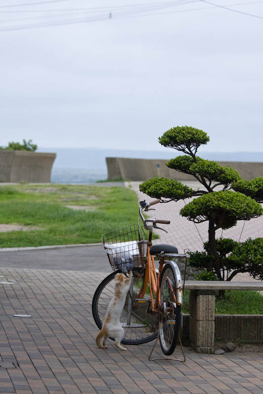 f:id:fubirai:20080910231251j:image