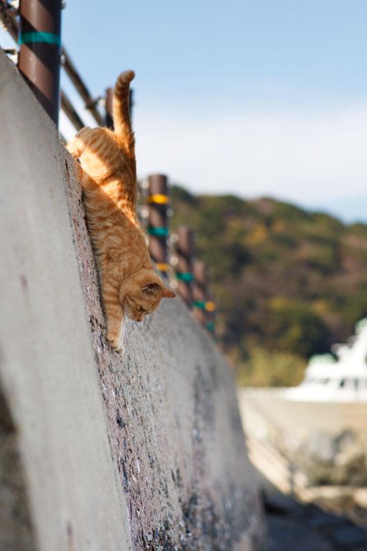 f:id:fubirai:20100422231220j:image