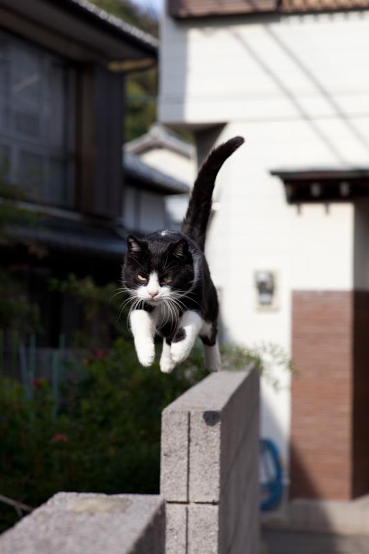 f:id:fubirai:20110111231304j:image