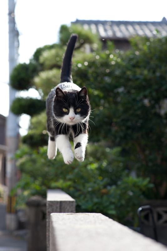 f:id:fubirai:20110111231305j:image