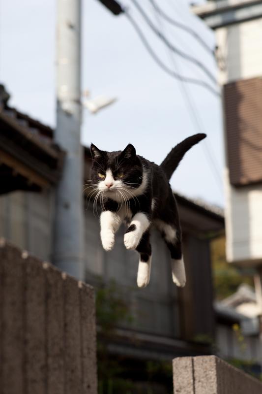 f:id:fubirai:20110111231306j:image
