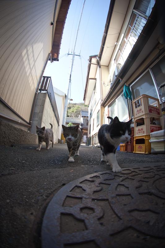 f:id:fubirai:20110113230121j:image