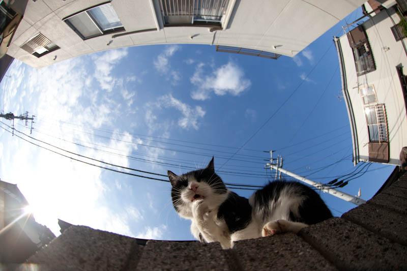 f:id:fubirai:20110722211923j:image