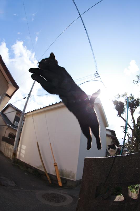 f:id:fubirai:20120129000528j:image