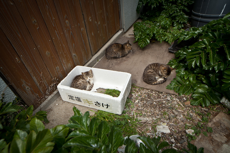 f:id:fubirai:20120412230437j:image