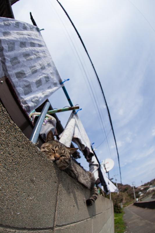 f:id:fubirai:20120623232638j:image
