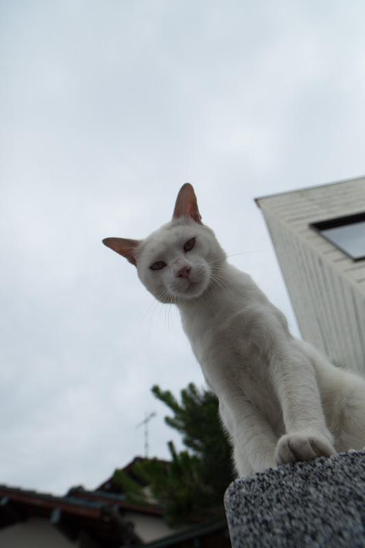 f:id:fubirai:20120629220653j:image