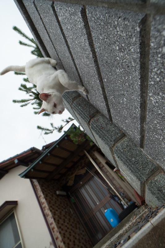 f:id:fubirai:20120629220654j:image