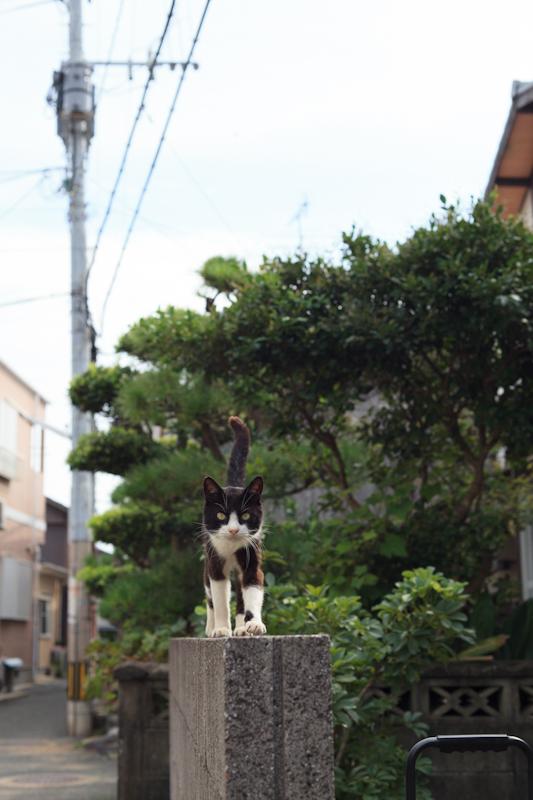 f:id:fubirai:20120921205019j:image