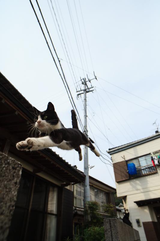 f:id:fubirai:20120921205020j:image
