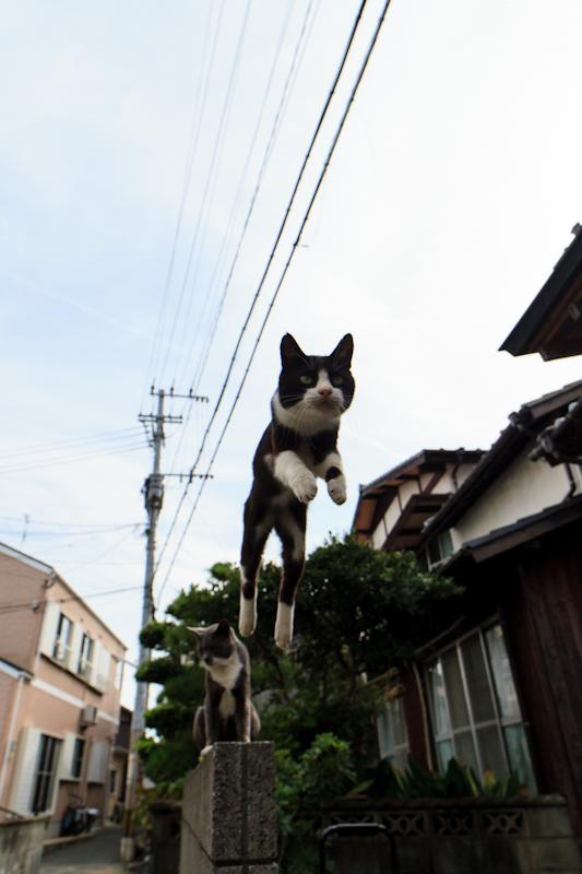 f:id:fubirai:20120921205021j:image