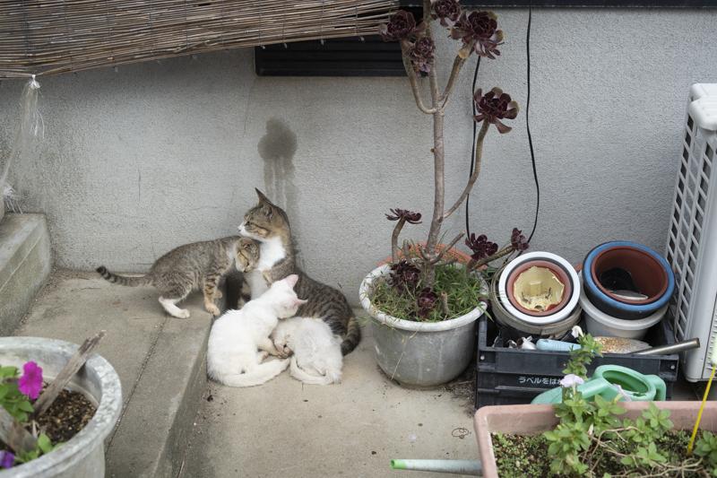 f:id:fubirai:20190215223442j:image