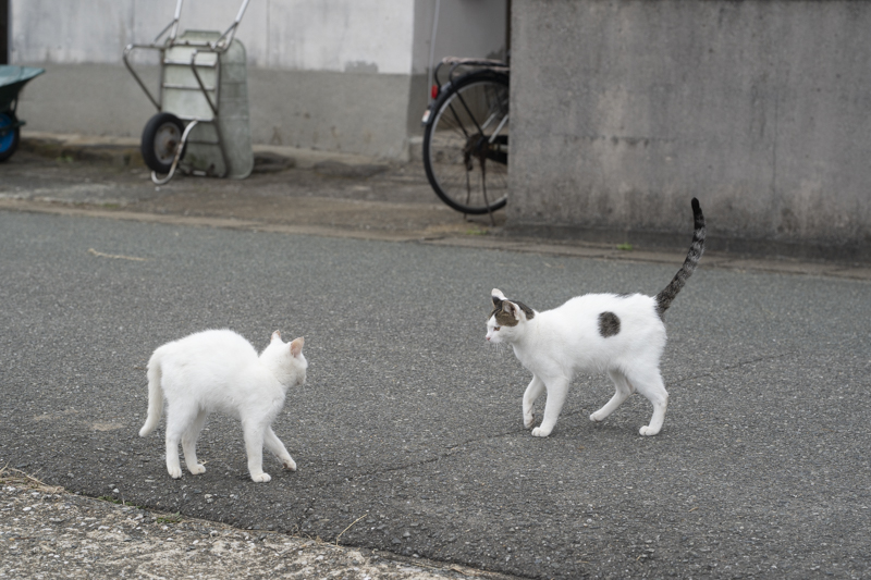 f:id:fubirai:20190220001442j:image
