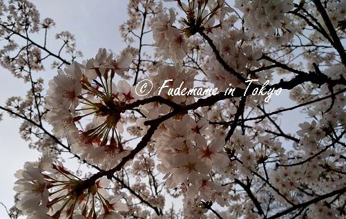 f:id:fudemameintokyo:20180328064343p:plain
